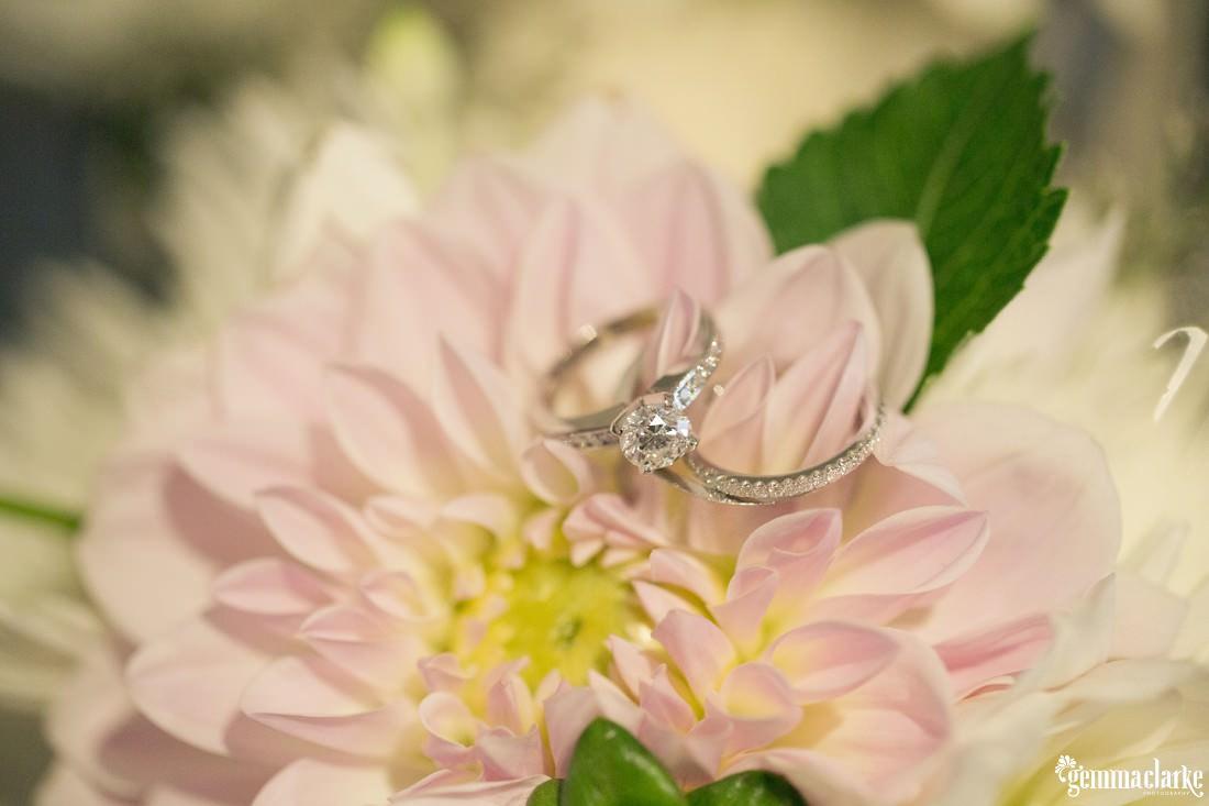 gemma-clarke-photography_southern-highlands-wedding_sylvan-glen-wedding_alicia-and-james_0001