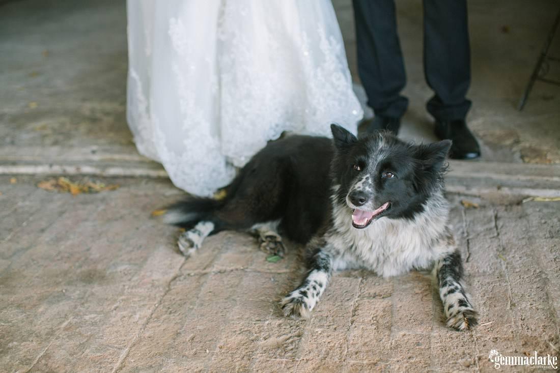 gemma-clarke-photography_summerlees-wedding_southern-highlands-wedding_erin-and-alistair_0058