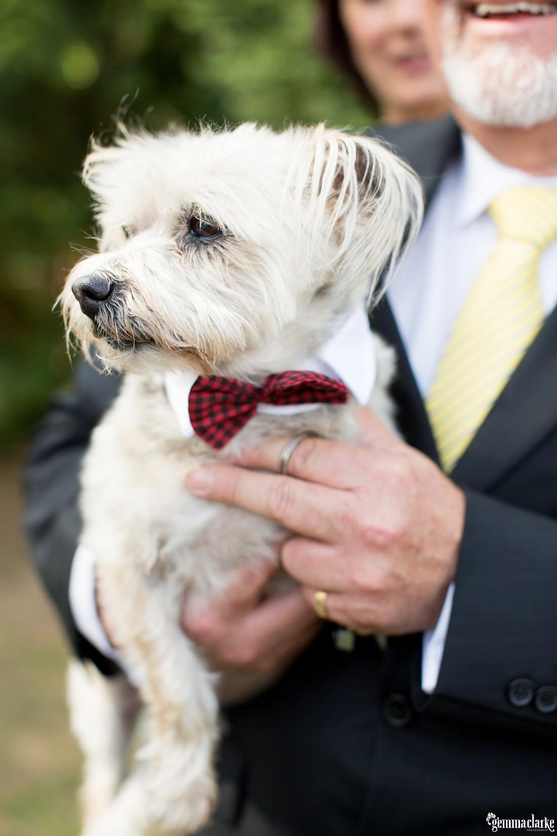 gemma-clarke-photography_southern-highlands-wedding_biota-dining-wedding_ashley-and-hally_0045