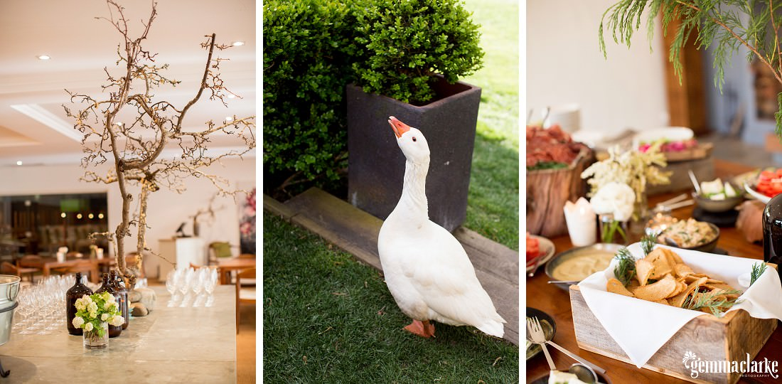 gemma-clarke-photography_southern-highlands-wedding_biota-dining-wedding_ashley-and-hally_0067