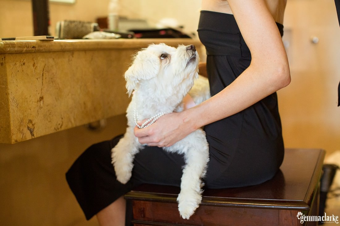 A bride's Maltese terrier dog sitting on her lap as she gets her hair and makeup done - Eastern Suburbs Wedding