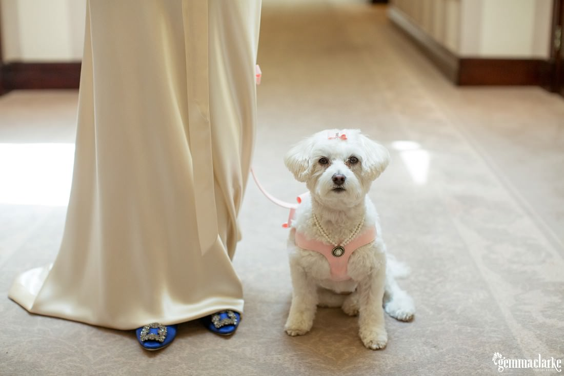 gemma-clarke-photography_watsons-bay-wedding_dog-bridesmaid_kristyl-and-ben_0029