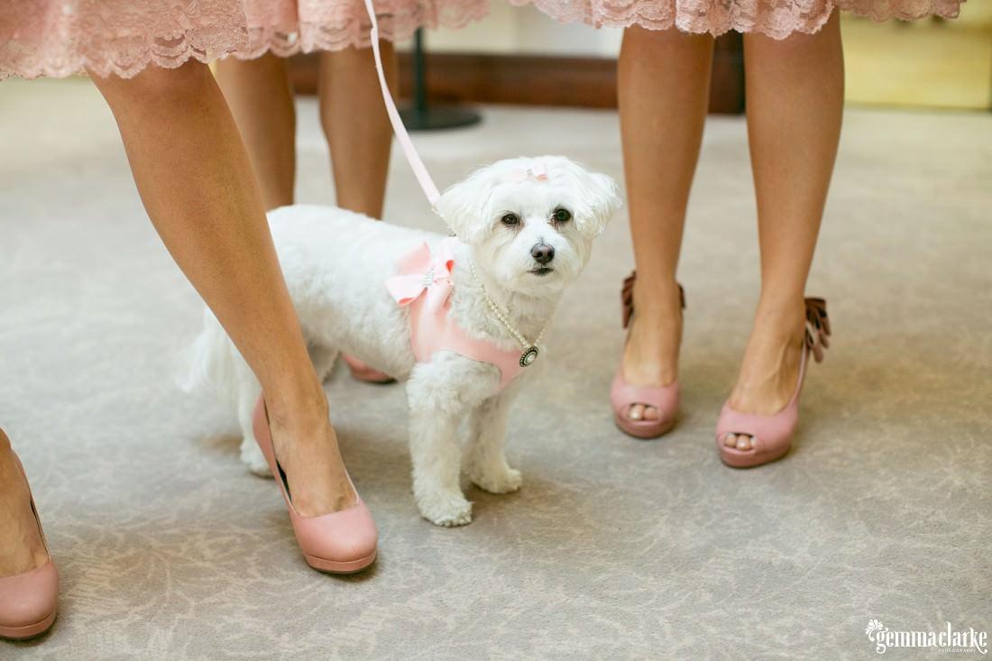 gemma-clarke-photography_watsons-bay-wedding_dog-bridesmaid_kristyl-and-ben_0032