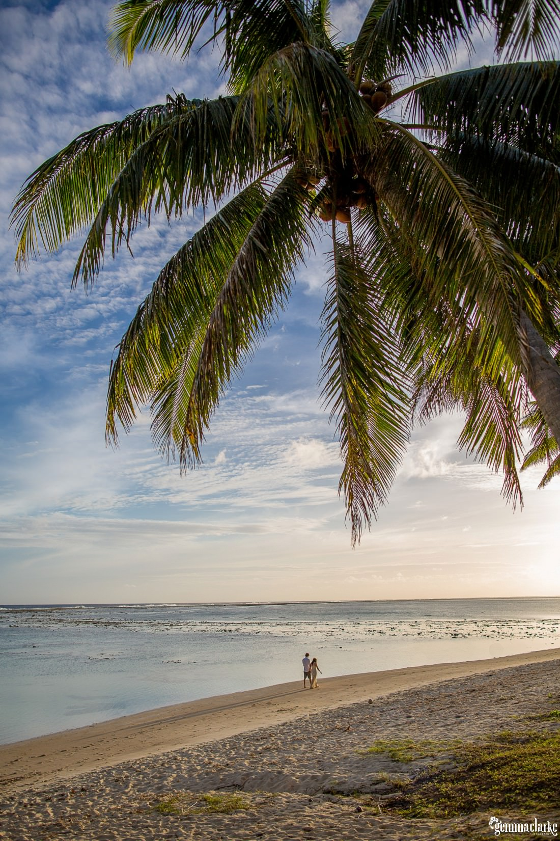 Large overhanging palm tree with the water and beach in the background and the couple very small walking away, portraits in paradise.