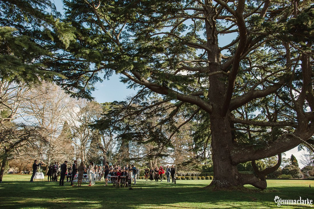 An outdoor wedding ceremony under a large tree - Southern Highlands Winter Wedding