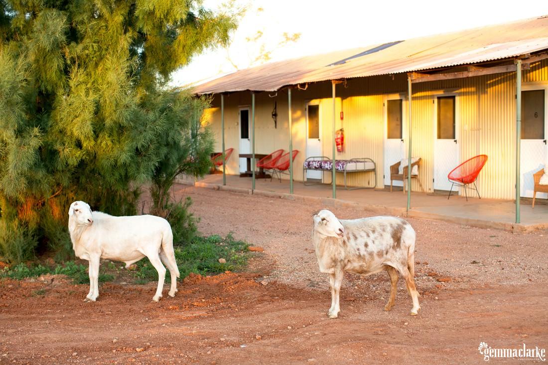 gemmaclarkephotography_bullara-station_family-farm-photos_0022