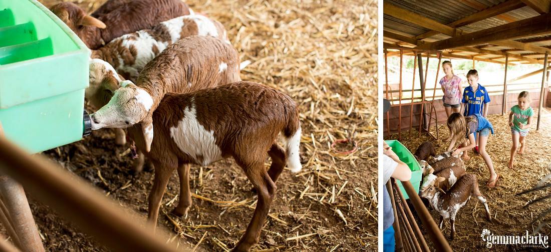gemmaclarkephotography_bullara-station_family-farm-photos_0079