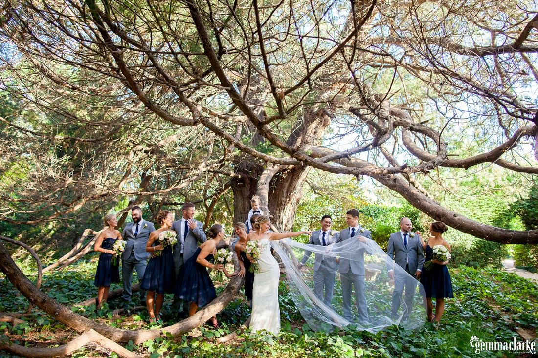 A bridal party posing around a large tree - Jaspers Wedding