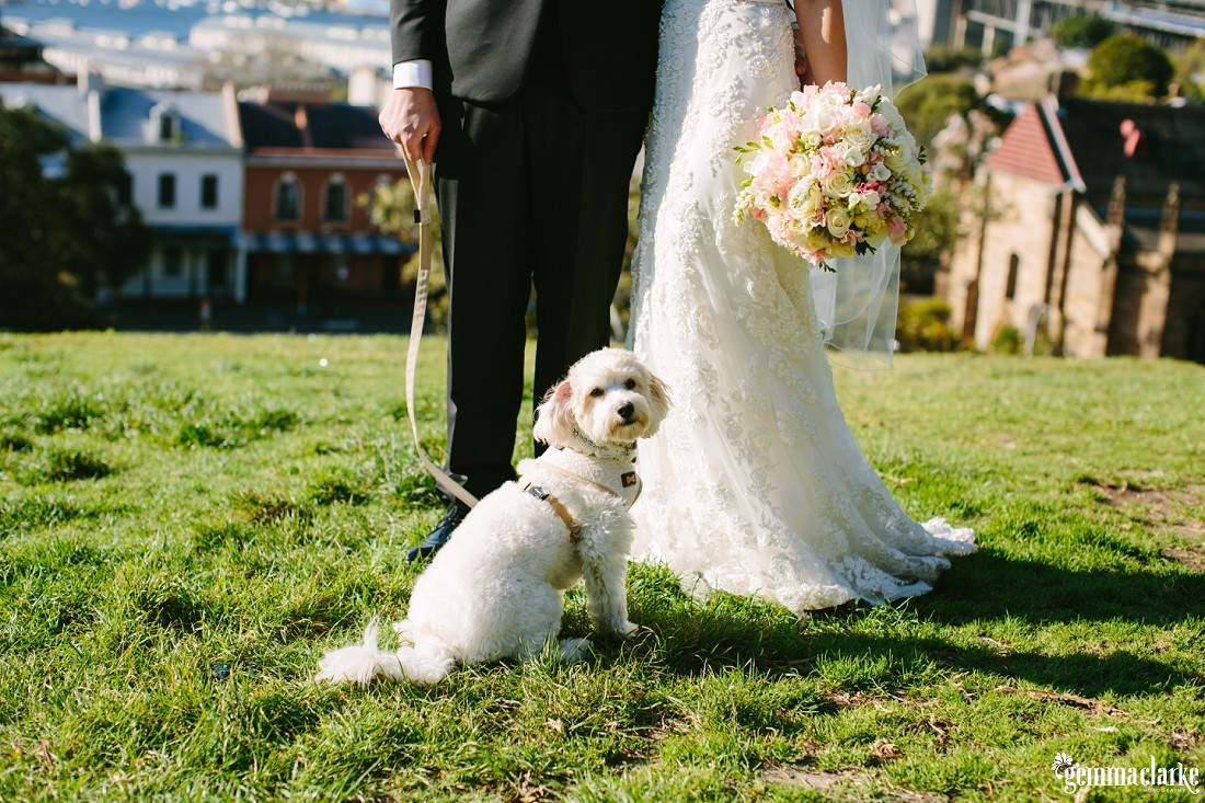 A small white terrier sitting with the bride and groom