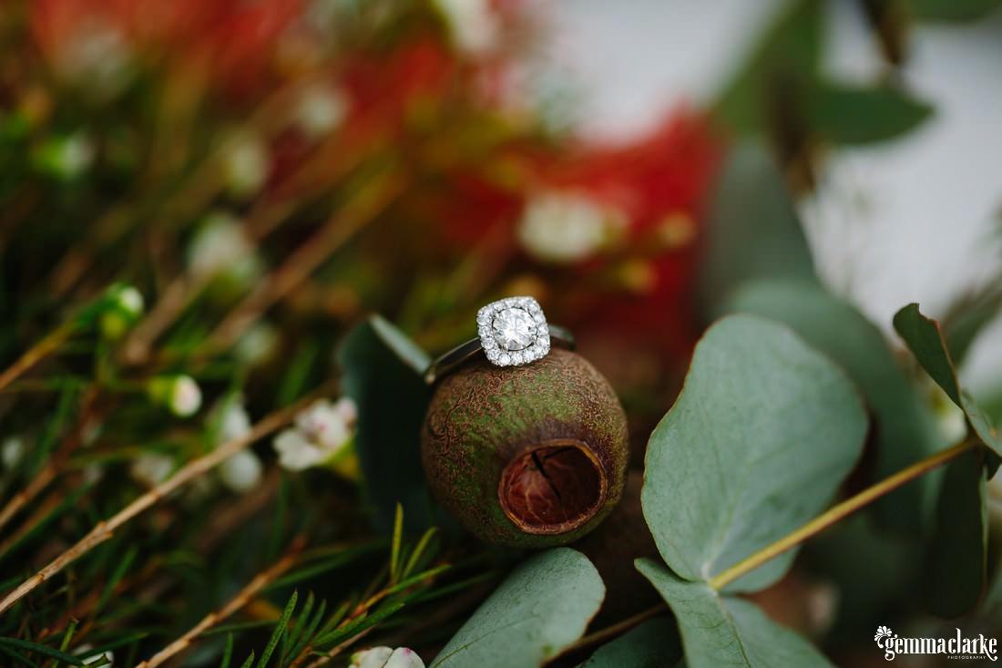 A diamond ring resting on a gumnut