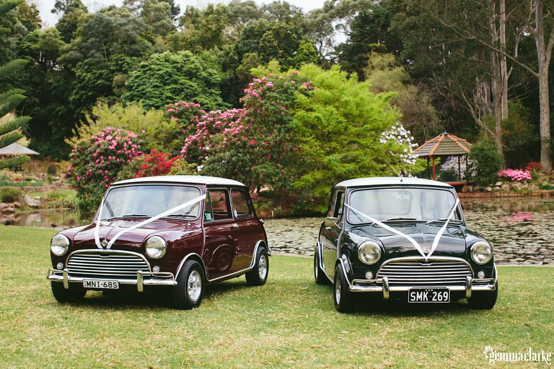 Two classic Minis with white ribbons on the front, parked on a lawn in front of a pond