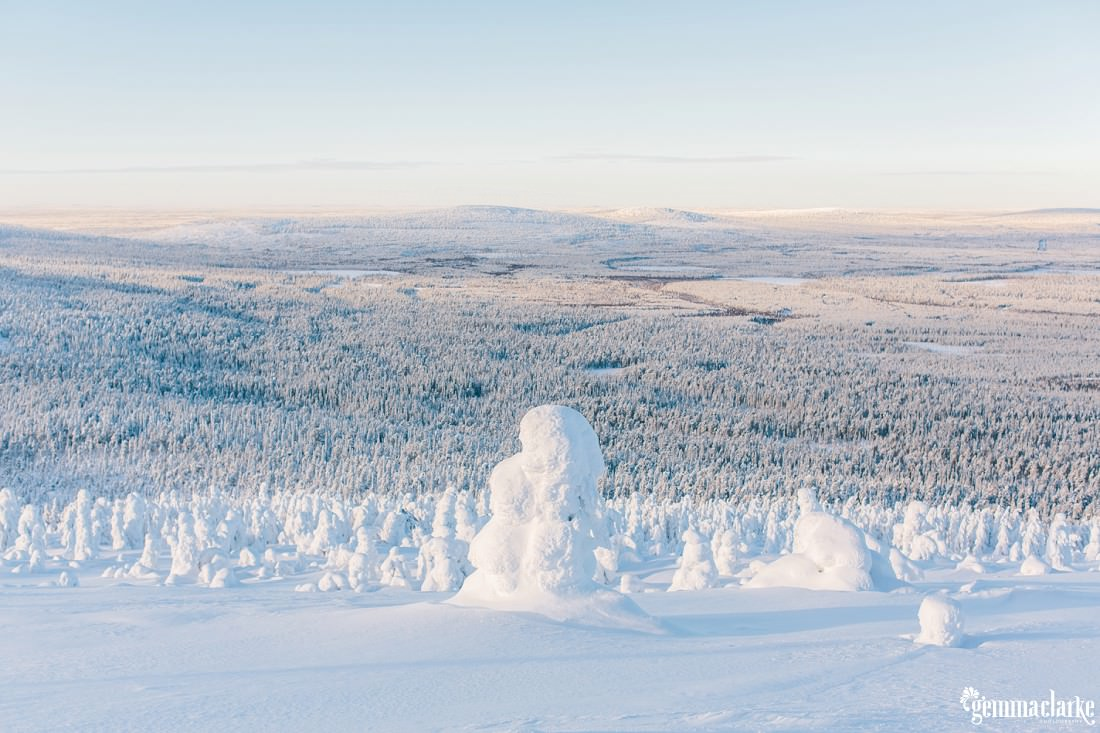 A view of a snow covered forest from a snowy hill