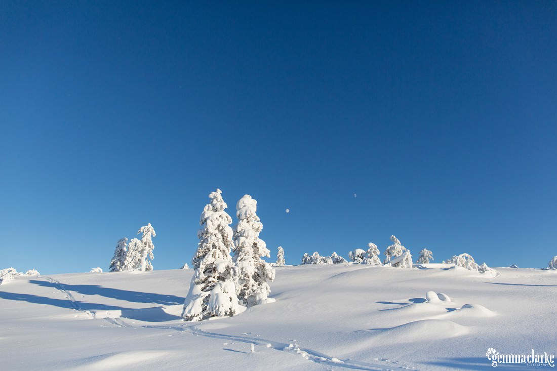 Thick snow covers trees on a hill