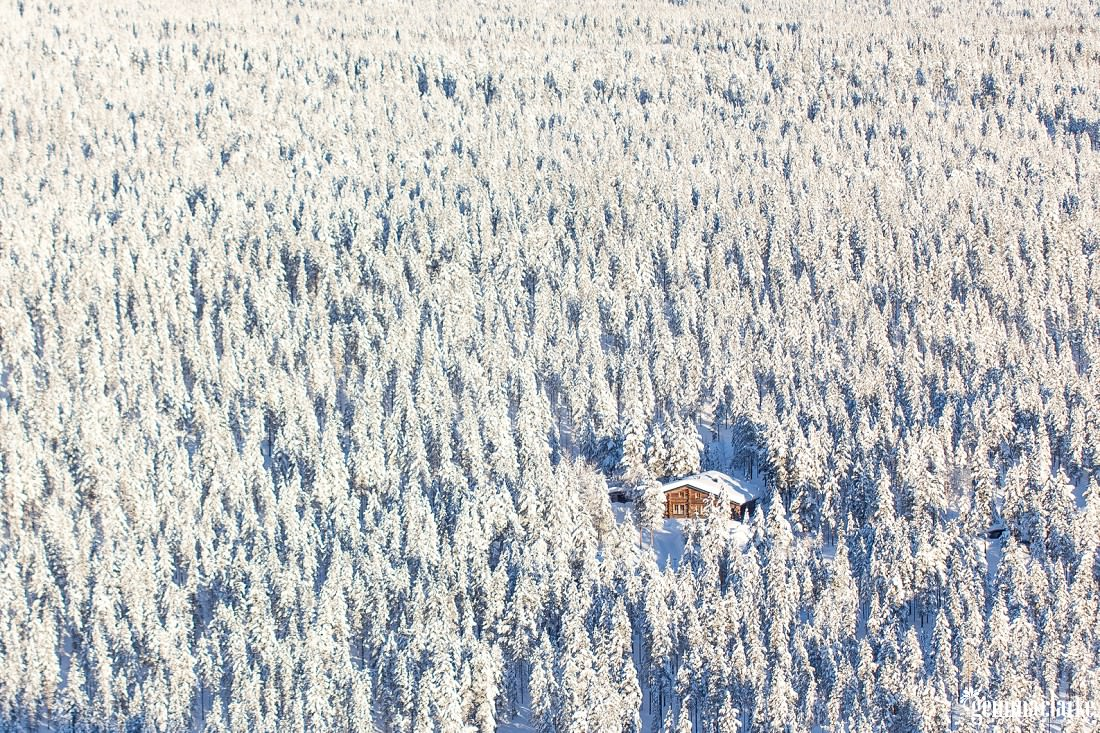 A wooden cabin in a snow covered forest