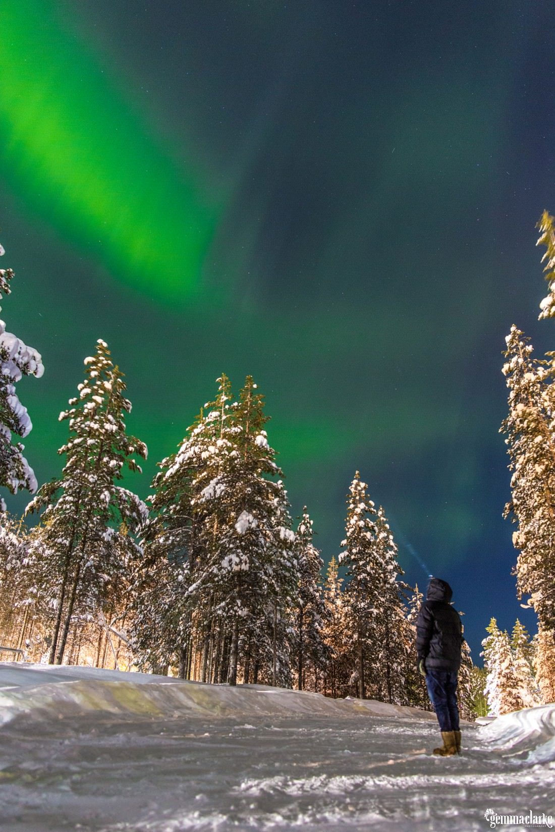 A woman looking up at the northern lights in the sky over a snowy forest