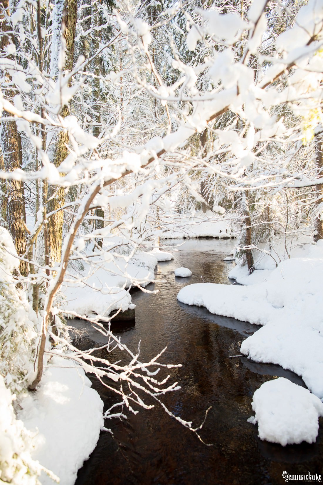 A small river running through a snowy forest