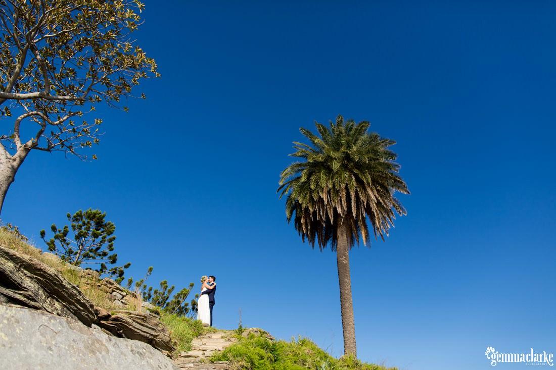 A bride and groom kissing near a large palm tree, Shark Island Wedding