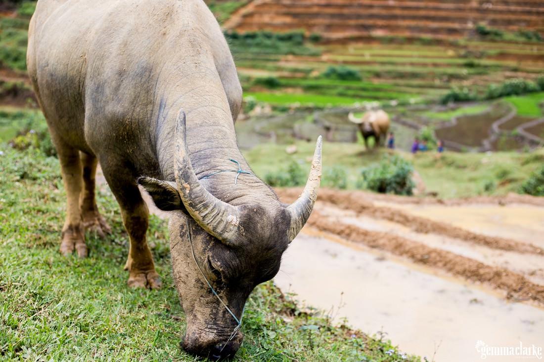 gemmaclarkephotography_sapa-vietnam_homestay-trek-0021