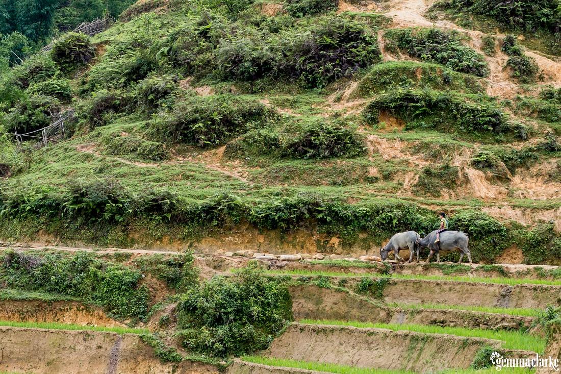 gemmaclarkephotography_sapa-vietnam_homestay-trek-0031