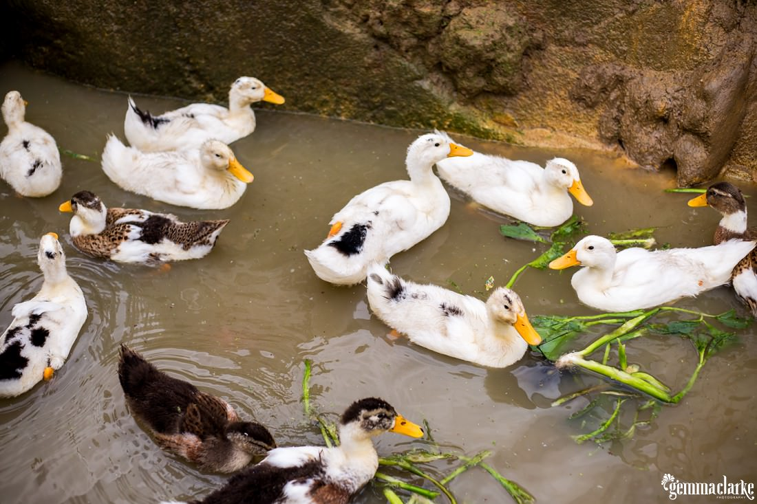 gemmaclarkephotography_sapa-vietnam_homestay-trek-0056