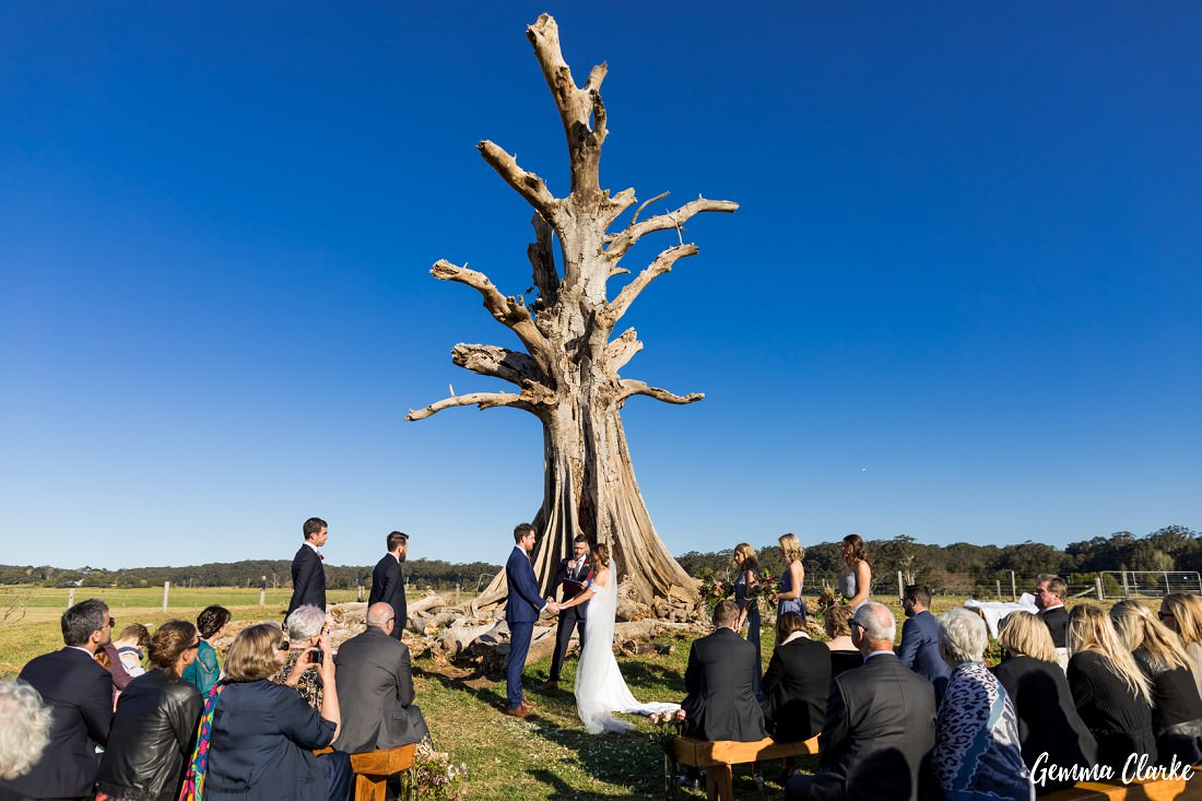 The famous Willow Farm Wedding Ceremony tree in a country field with the bright blue sky showing it off!